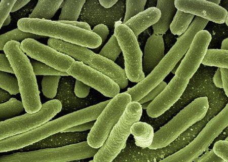 Contra bacterias patógenas - 1892